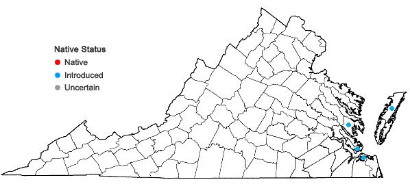 Locations ofTamarix gallica L. in Virginia