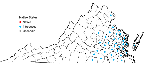 Locations ofTeesdalia nudicaulis (Linnaeus) Aiton f. in Virginia