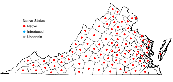 Locations ofTephrosia virginiana (L.) Pers. in Virginia