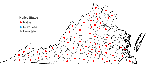 Locations ofThaspium trifoliatum (L.) Gray in Virginia