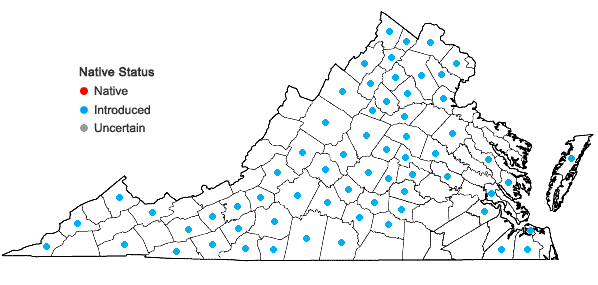 Locations ofThlaspi arvense Linnaeus in Virginia