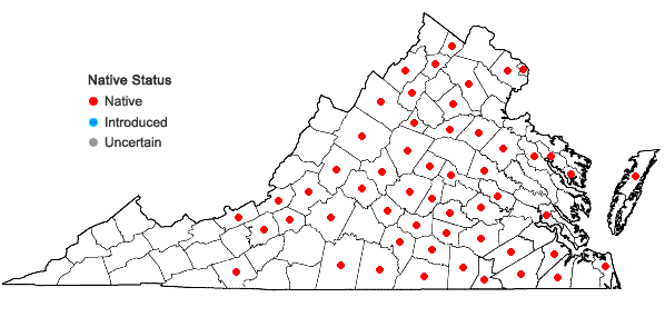Locations ofToxicodendron pubescens P.Miller in Virginia