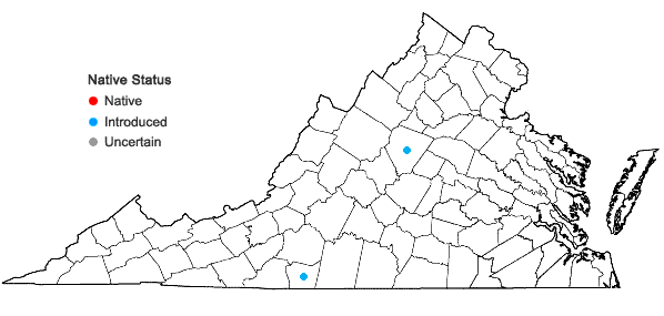 Locations ofTragia betonicifolia Nuttall in Virginia