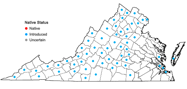 Locations ofTragopogon dubius Scop. in Virginia