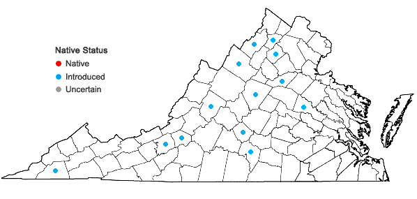 Locations ofTragopogon pratensis L. in Virginia