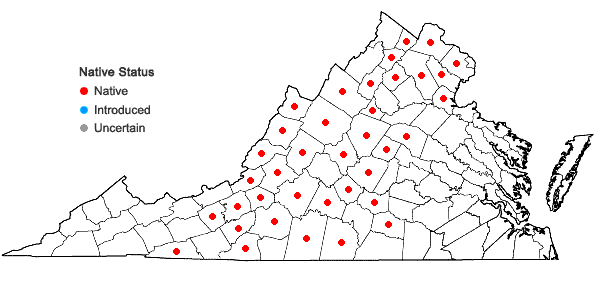 Locations ofTrichophorum planifolium (Sprengel) Palla in Virginia
