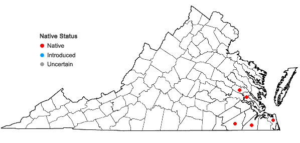 Locations ofTridens chapmanii (Small) Chase in Virginia