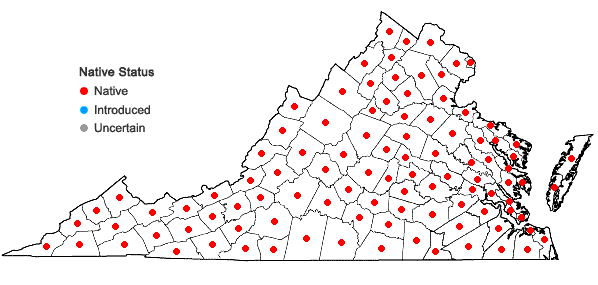 Locations ofTridens flavus (L.) A.S. Hitchc. var. flavus in Virginia