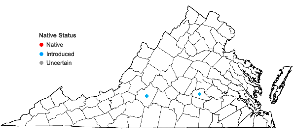 Locations ofTrifolium vesiculosum Savi in Virginia
