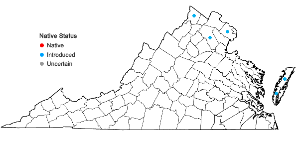 Locations ofTripidium ravennae (L.) Scholz in Virginia