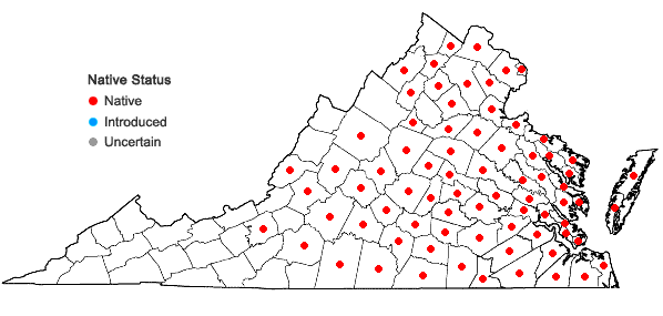 Locations ofTripsacum dactyloides (L.) L. var. dactyloides in Virginia