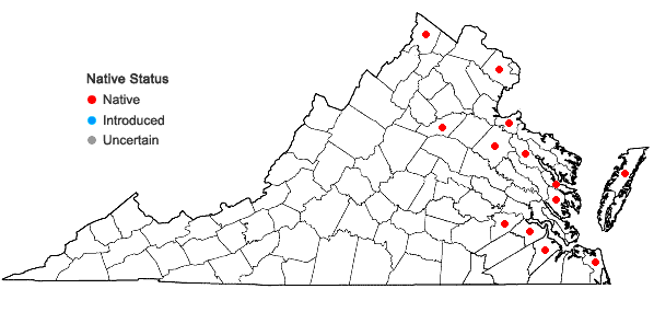 Locations ofTypha ×glauca Godron in Virginia