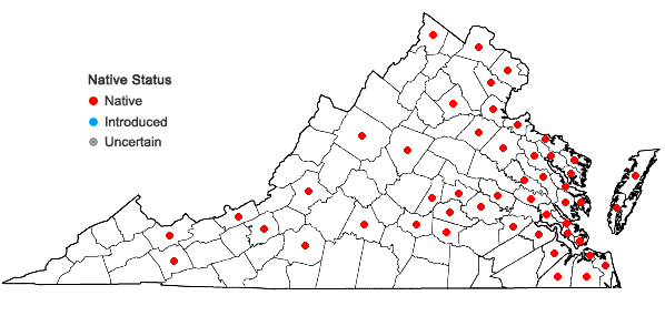 Locations ofTypha angustifolia L. in Virginia