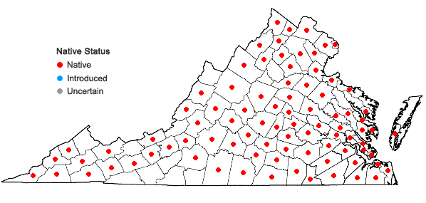 Locations ofUlmus americana L. in Virginia