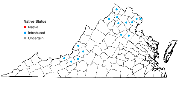 Locations ofUlmus pumila L. in Virginia