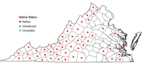 Locations ofUvularia puberula Michx. in Virginia
