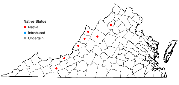 Locations ofVaccinium altomontanum W.W. Ashe in Virginia