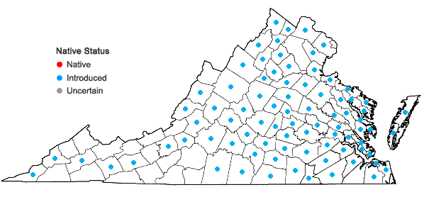 Locations ofValerianella locusta (L.) Latterade in Virginia
