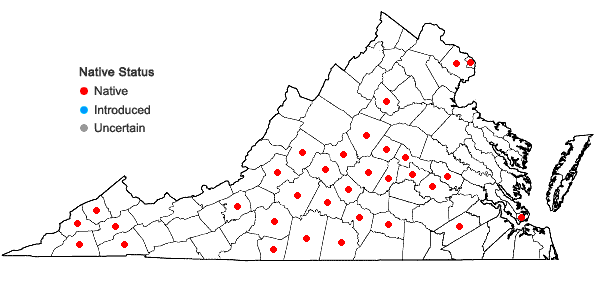 Locations ofValerianella umbilicata (Sull.) Wood in Virginia