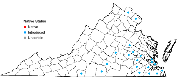 Locations ofVerbena brasiliensis Vell. in Virginia