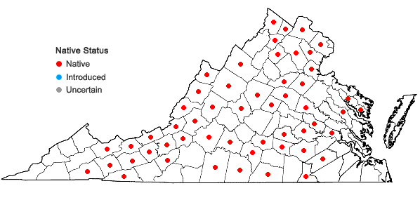 Locations ofVerbena hastata L. in Virginia
