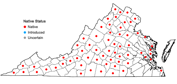 Locations ofVerbena simplex Lehm. in Virginia