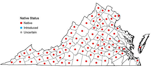 Locations ofVerbesina alternifolia (L.) Britt. ex Kearney in Virginia