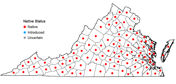 Locations ofVerbesina occidentalis (L.) Walt. in Virginia
