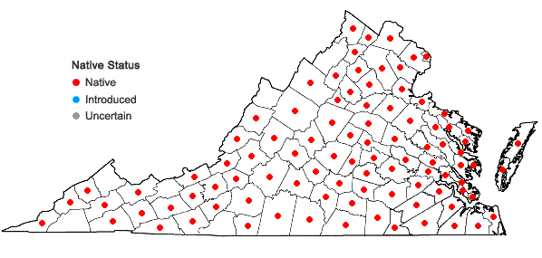 Locations ofVeronica peregrina L. var. peregrina in Virginia
