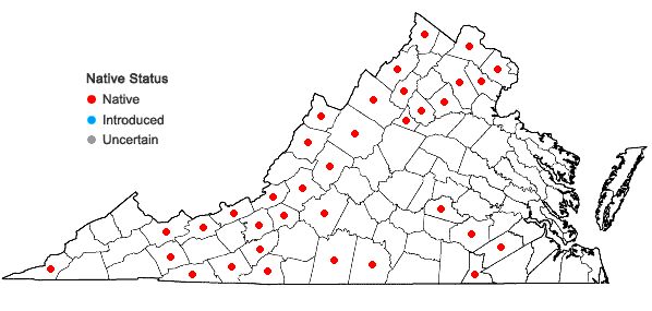 Locations ofVeronicastrum virginicum (L.) Farwell in Virginia