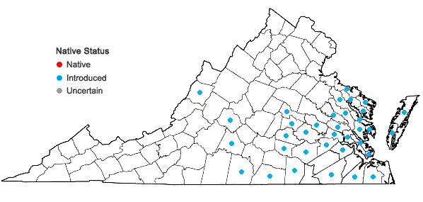 Locations ofVicia hirsuta (L.) S.F. Gray in Virginia