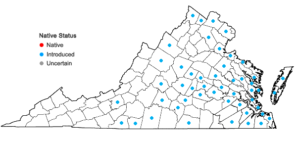 Locations ofVinca major L. in Virginia