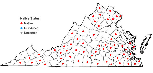 Locations ofViola affinis Le Conte in Virginia