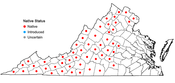 Locations ofViola canadensis L. var. canadensis in Virginia