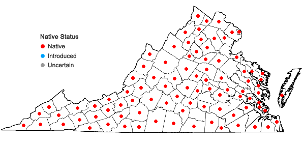 Locations ofViola cucullata Ait. in Virginia