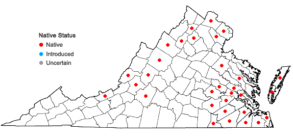 Locations ofViola lanceolata L. var. lanceolata in Virginia