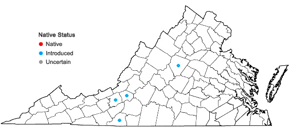 Locations ofViola odorata L. in Virginia