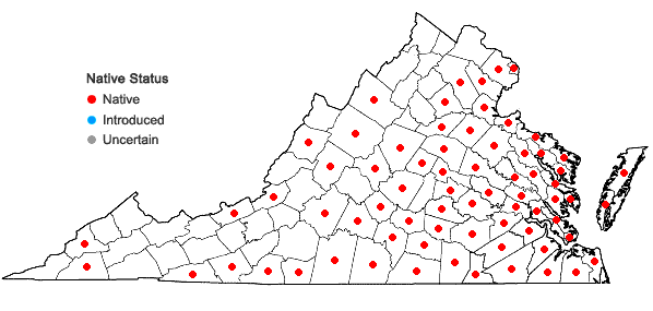 Locations ofViola primulifolia L. in Virginia