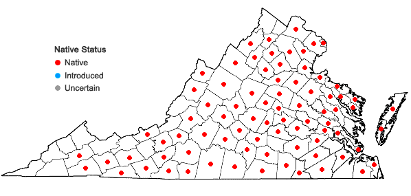 Locations ofViola sagittata Aiton in Virginia
