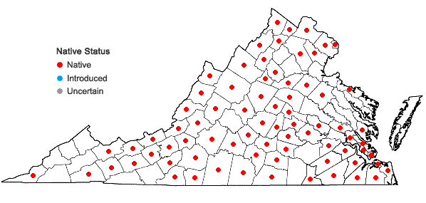 Locations ofViola sororia Willd. in Virginia