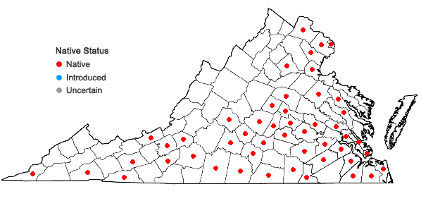 Locations ofVitis cinerea (Engelm.) Engelm. ex Millard in Virginia
