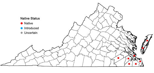 Locations ofVulpia elliotea (Raf.) Fern. in Virginia