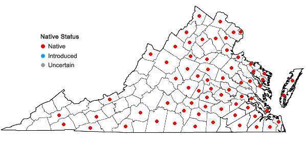 Locations ofVulpia octoflora (Walt.) Rydb. in Virginia