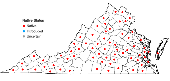 Locations ofWeissia controversa Hedwig in Virginia