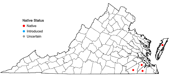 Locations ofXyris caroliniana Walter in Virginia