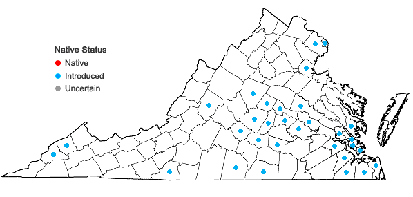 Locations ofYoungia japonica (L.) DC. in Virginia