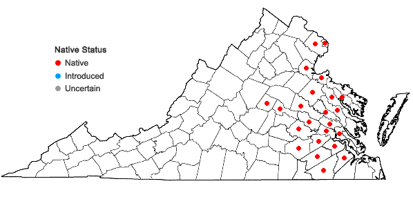 Locations ofZizaniopsis miliacea (Michx.) Doell & Aschers. in Virginia