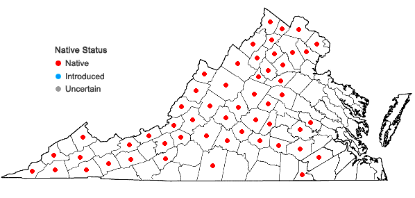 Locations ofZizia aptera (Gray) Fern. in Virginia