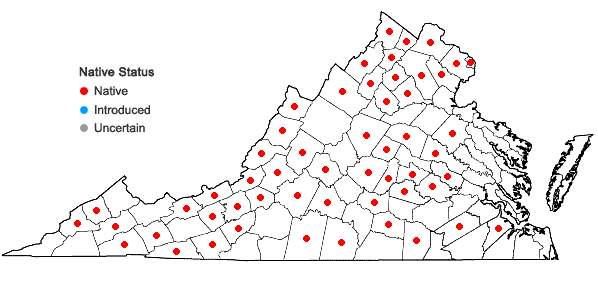 Locations ofZizia aurea (L.) W.D.J. Koch in Virginia